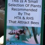 Plants that attract bees.