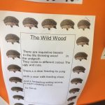 Our Wild Wood Poems