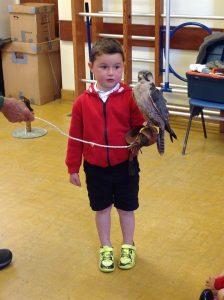 Welsh Birds of Prey 1