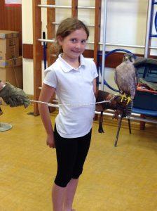 Welsh Birds of Prey 10