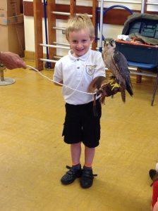 Welsh Birds of Prey 2