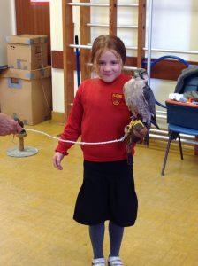 Welsh Birds of Prey 4