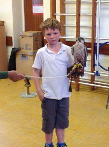 Welsh Birds of Prey 5