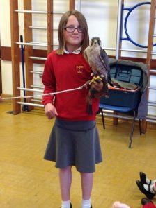 Welsh Birds of Prey 6
