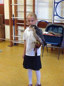 Welsh Birds of Prey 8