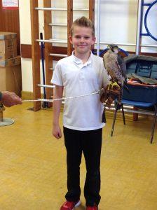 Welsh Birds of Prey 9