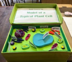 7O cells2