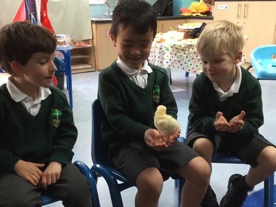 Chick Chick Chick Chick Chicken… | Oak Class