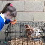 A visit from 'Julia the Hen'